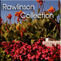 Rawlinson-Collection-project